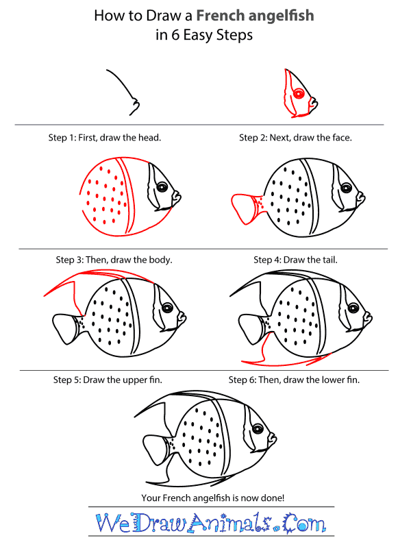 How to Draw a French Angelfish - Step-by-Step Tutorial