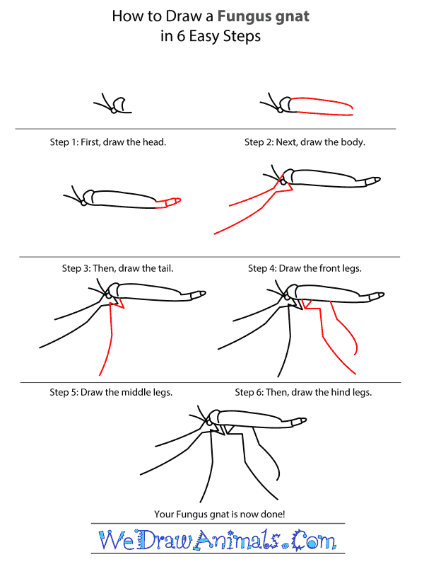 How to Draw a Fungus Gnat - Step-by-Step Tutorial