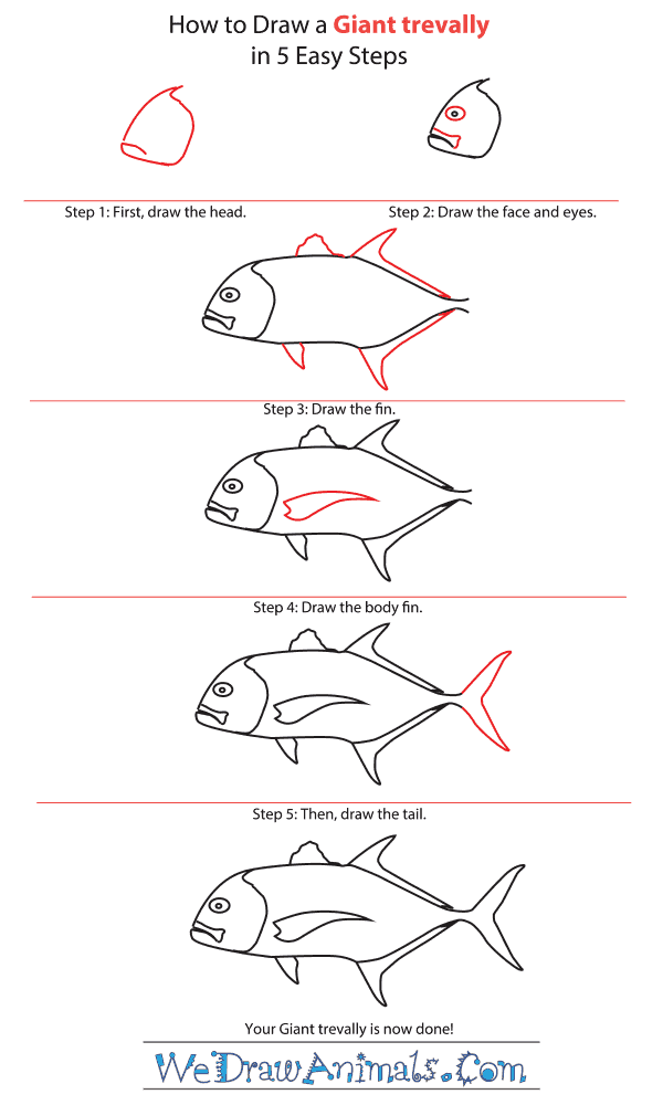 How to Draw a Giant Trevally - Step-by-Step Tutorial