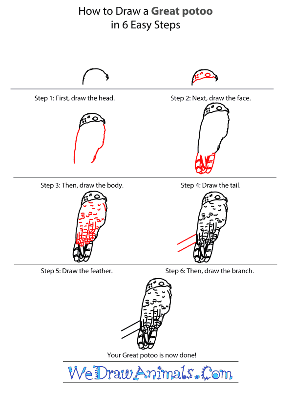 How to Draw a Great Potoo - Step-by-Step Tutorial