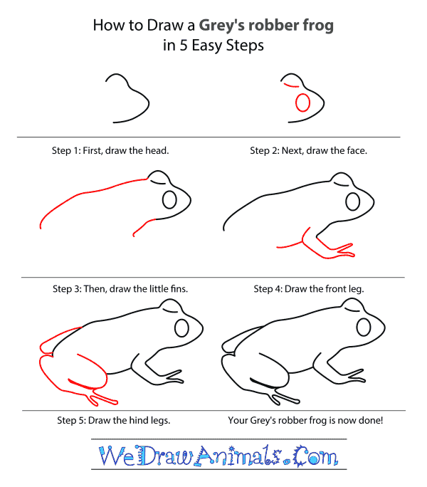 How to Draw a Grey's Robber Frog - Step-by-Step Tutorial