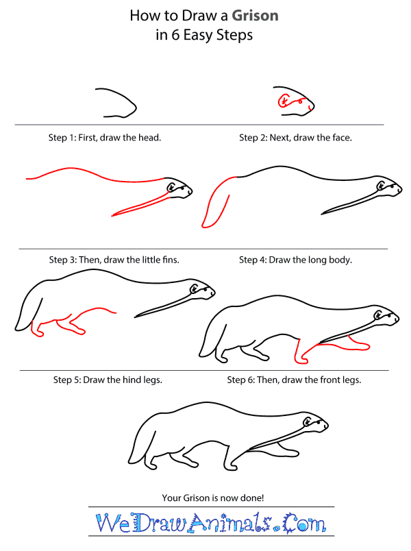 How to Draw a Grison - Step-by-Step Tutorial