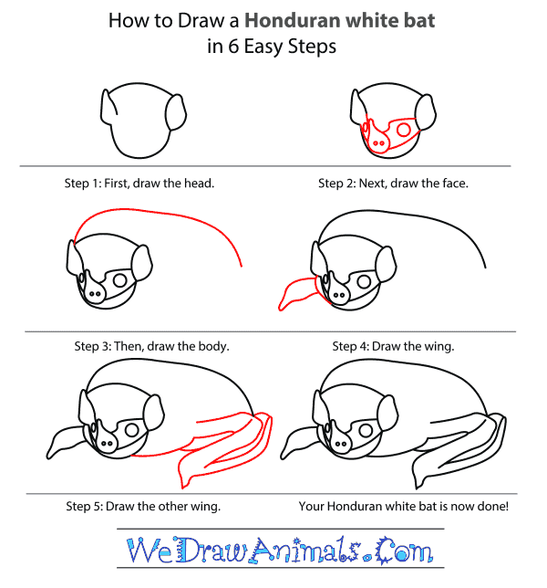 How to Draw a Honduran White Bat - Step-by-Step Tutorial