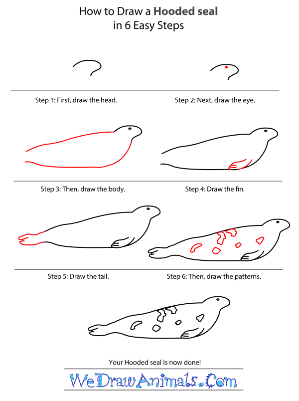 How to Draw a Hooded Seal - Step-by-Step Tutorial
