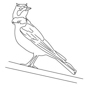 horned-lark-thumb