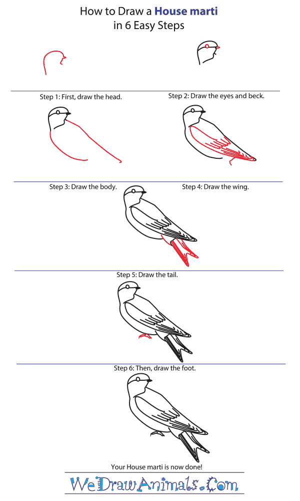 How to Draw a House Martin - Step-by-Step Tutorial