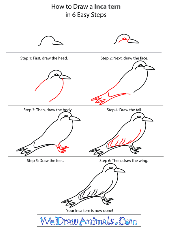 How to Draw an Inca Tern - Step-by-Step Tutorial