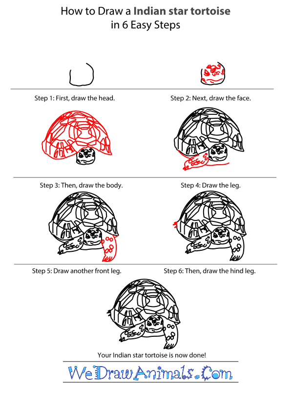 How to Draw an Indian Star Tortoise - Step-by-Step Tutorial