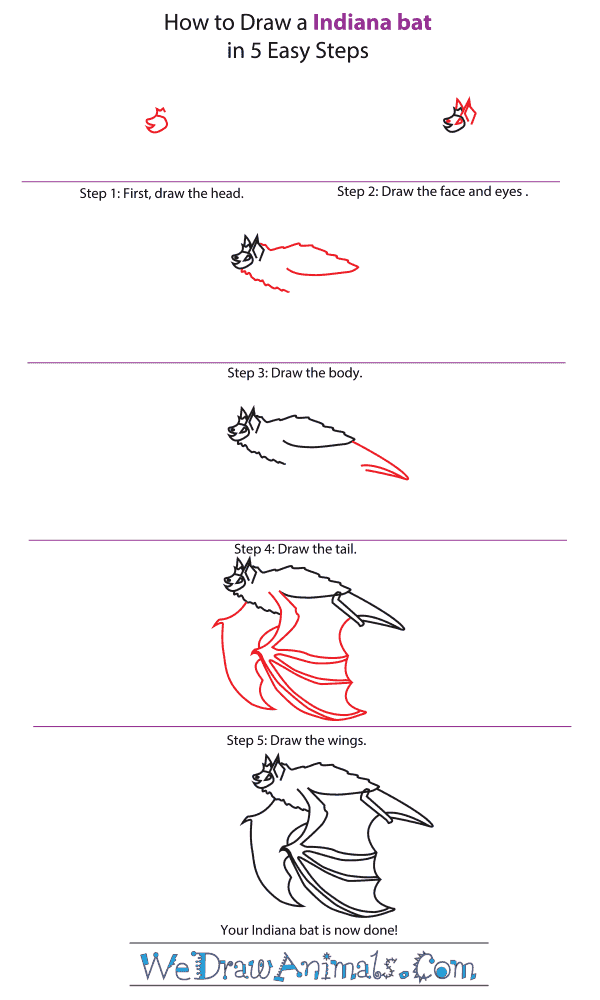 How to Draw an Indiana Bat - Step-by-Step Tutorial