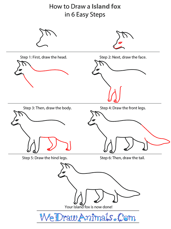 How to Draw an Island Fox - Step-by-Step Tutorial