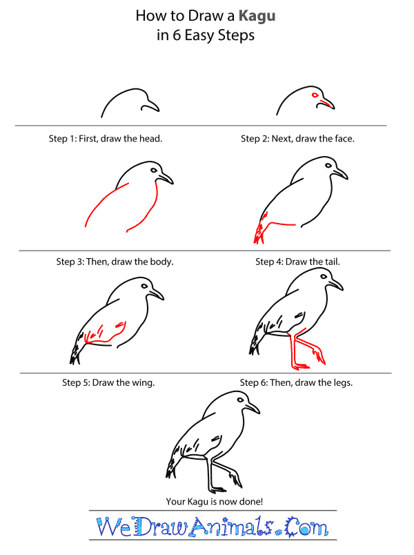 How to Draw a Kagu - Step-by-Step Tutorial