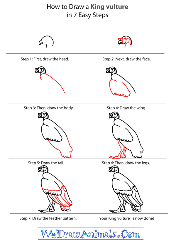 How to Draw a King Vulture - Step-by-Step Tutorial