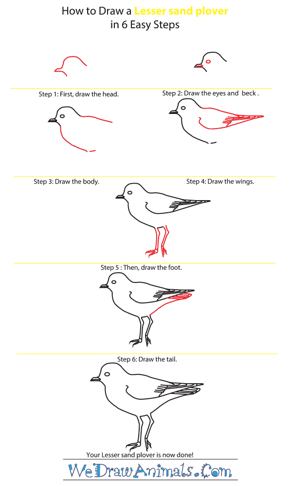 How to Draw a Lesser Sand Plover - Step-by-Step Tutorial