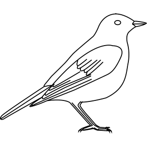 How To Draw A Mistle Thrush