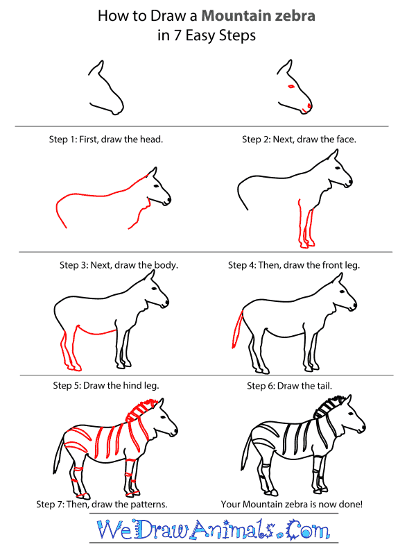 How to draw a mountain zebra step by step tutorial