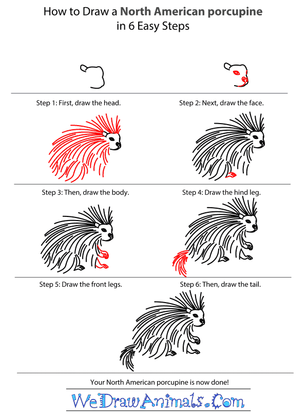 How to Draw a North American Porcupine - Step-by-Step Tutorial