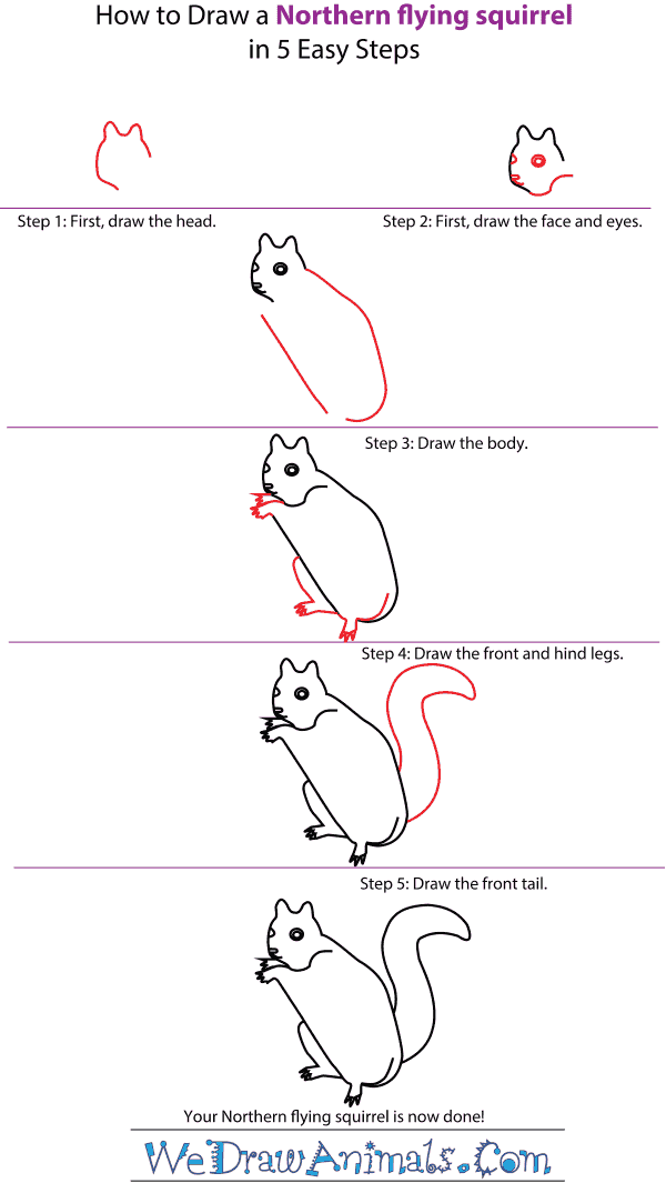 How to Draw a Northern Flying Squirrel - Step-by-Step Tutorial