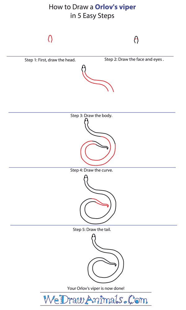 How to Draw an Orlov's Viper - Step-by-Step Tutorial