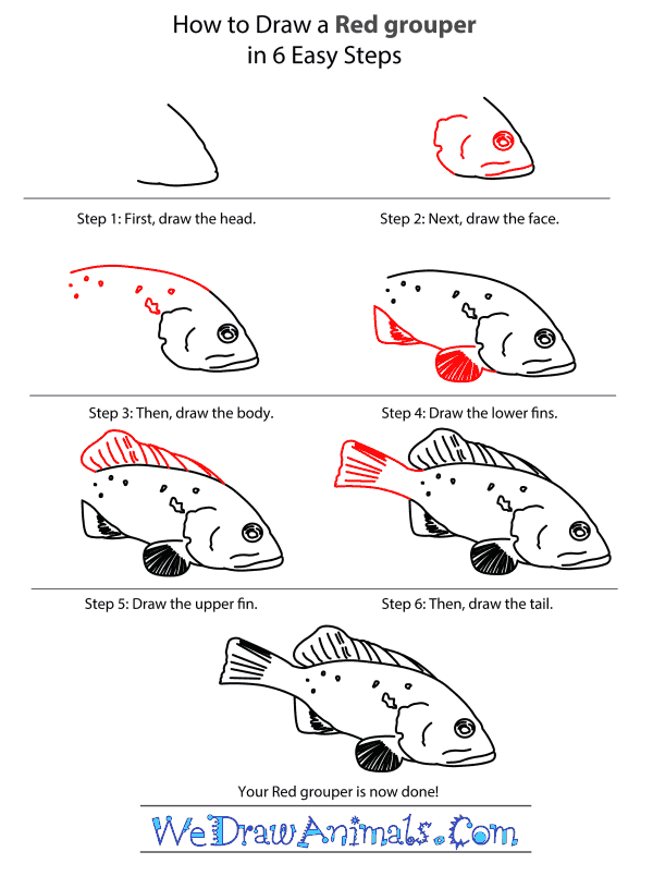 How to Draw a Red Grouper - Step-by-Step Tutorial