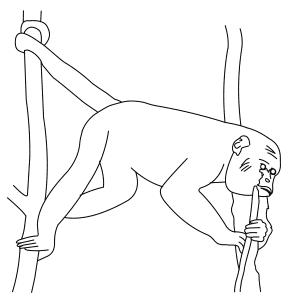 red-howler-monkey-thumb