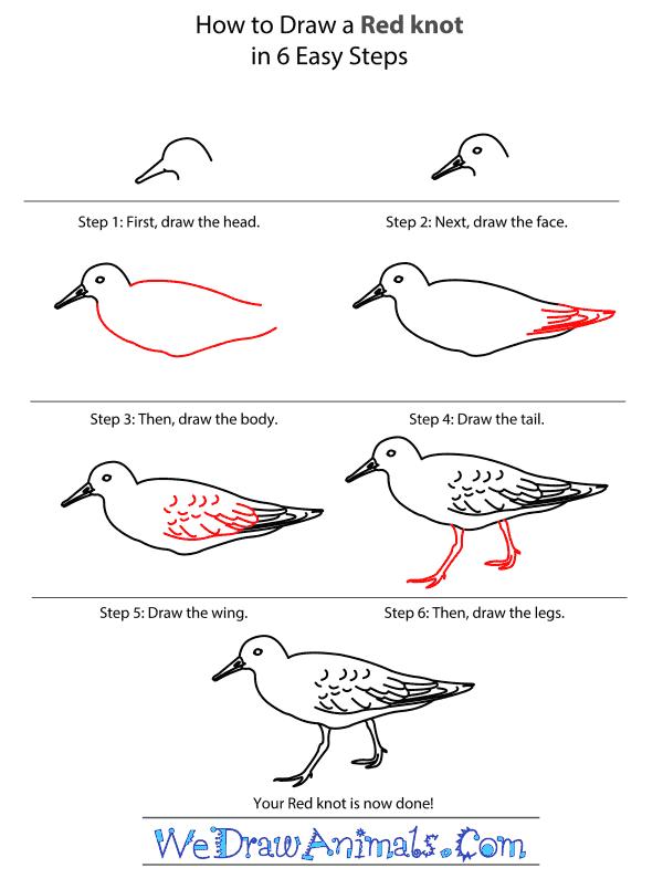 How to Draw a Red Knot - Step-by-Step Tutorial
