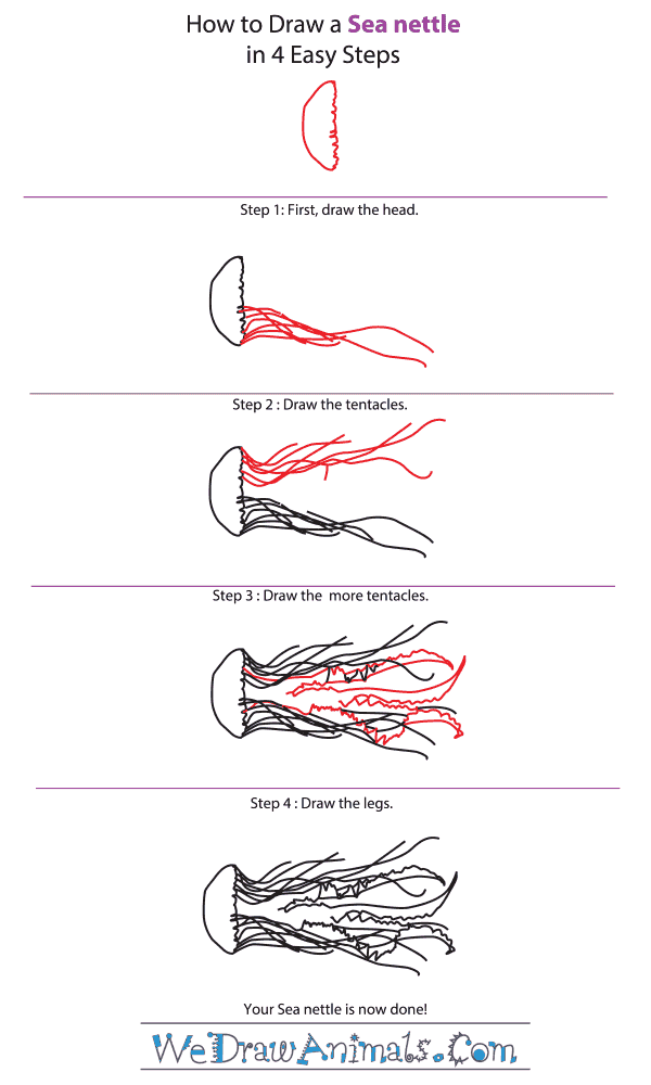 How to Draw a Sea Nettle - Step-by-Step Tutorial