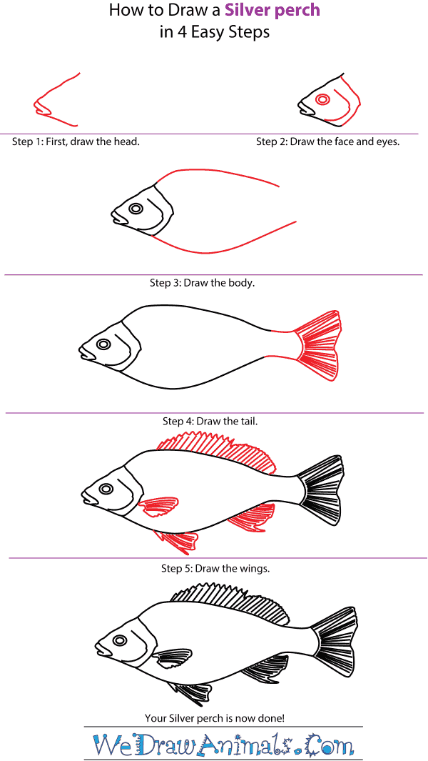 How to Draw a Silver Perch - Step-by-Step Tutorial