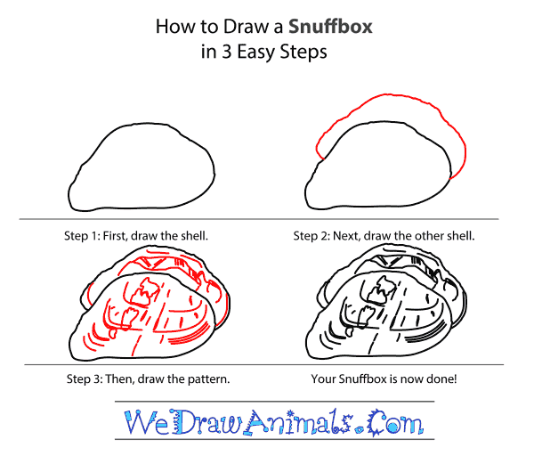 How to Draw a Snuffbox - Step-by-Step Tutorial