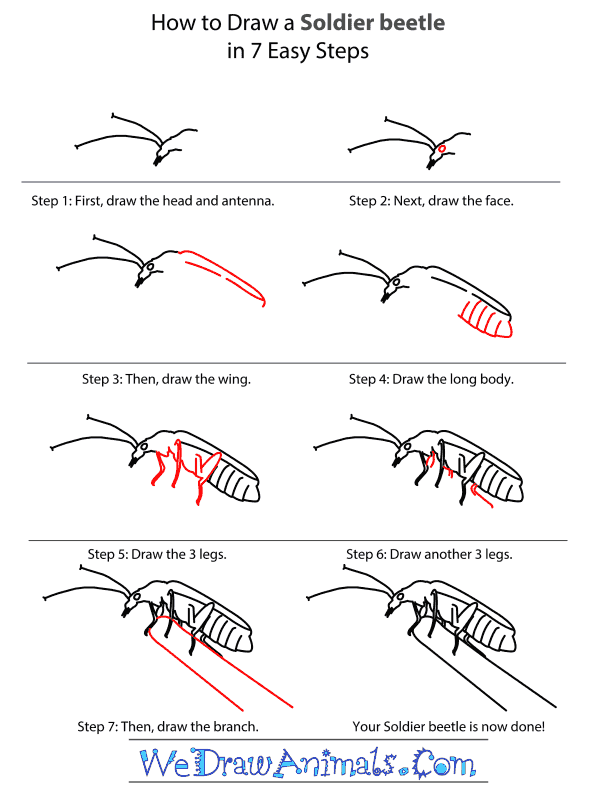 How to Draw a Soldier Beetle - Step-by-Step Tutorial