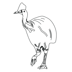 southern-cassowary-thumb