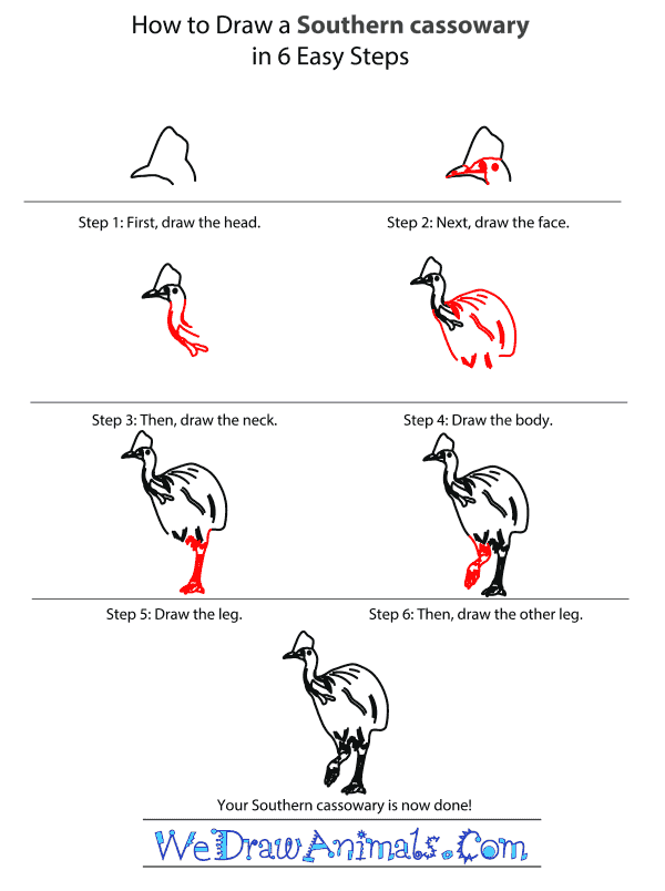 How to Draw a Southern Cassowary - Step-by-Step Tutorial