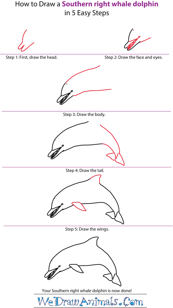 How to Draw a Spinner Dolphin - Step-by-Step Tutorial