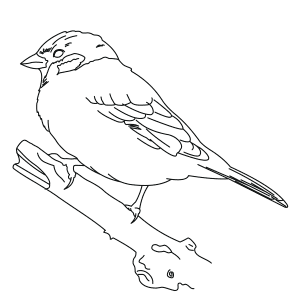 tree-sparrow-thumb