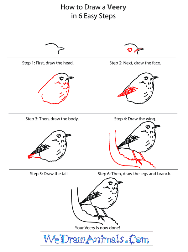 How to Draw a Veery - Step-by-Step Tutorial