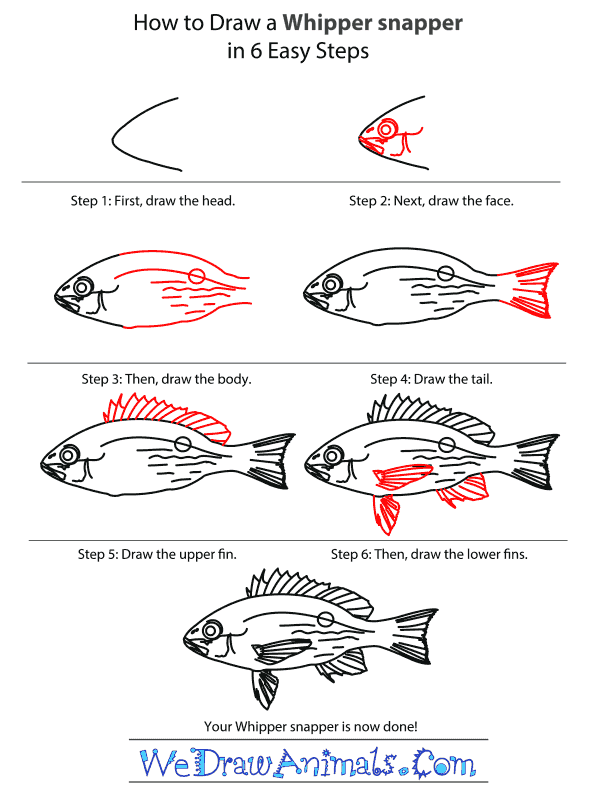 How to Draw a Whipper Snapper - Step-by-Step Tutorial
