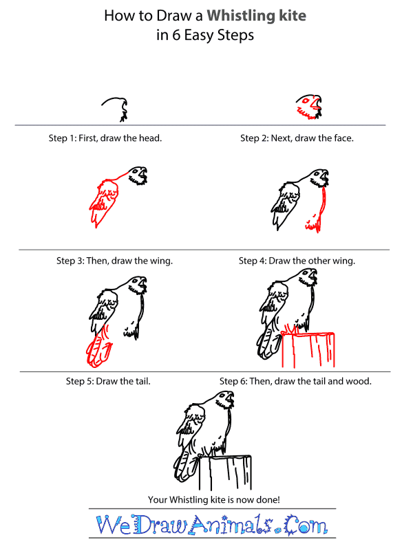 How to Draw a Whistling Kite - Step-by-Step Tutorial