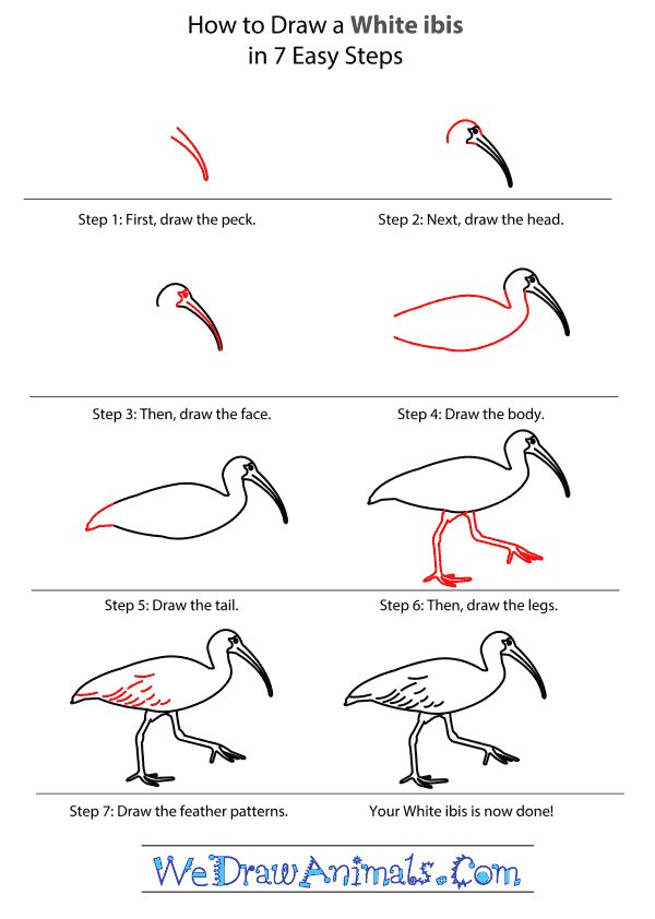 How to Draw a White Ibis - Step-by-Step Tutorial