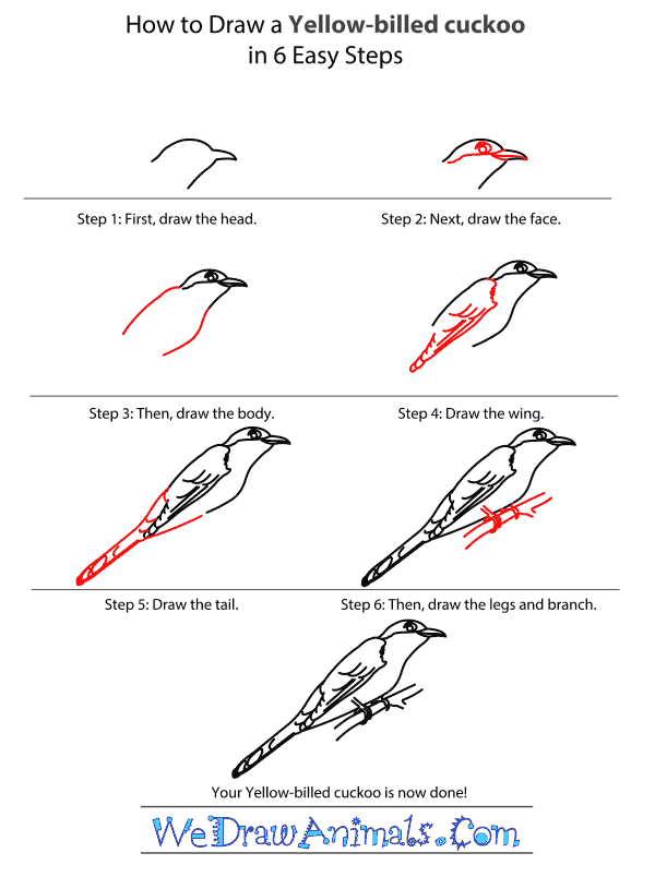 How to Draw a Yellow-Billed Cuckoo - Step-by-Step Tutorial