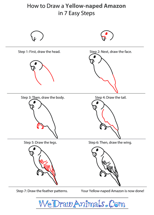 How to Draw a Yellow-Naped Amazon - Step-by-Step Tutorial