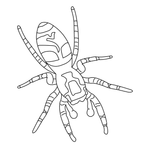 zebra-spider-thumb