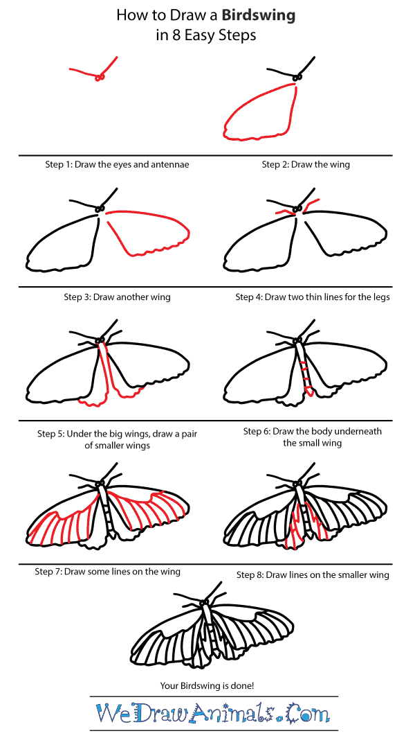 How to Draw a Birdwing - Step-by-Step Tutorial