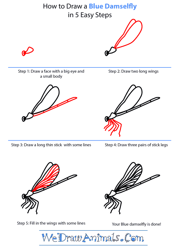 How to Draw a Blue Damselfly - Step-by-Step Tutorial