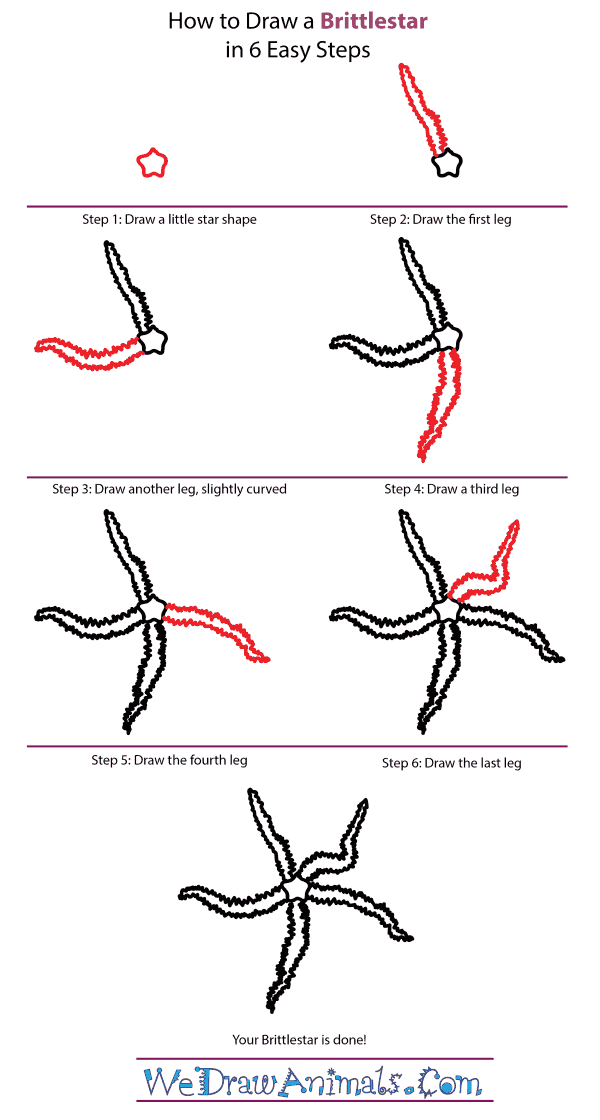 How to Draw a Brittlestar - Step-by-Step Tutorial