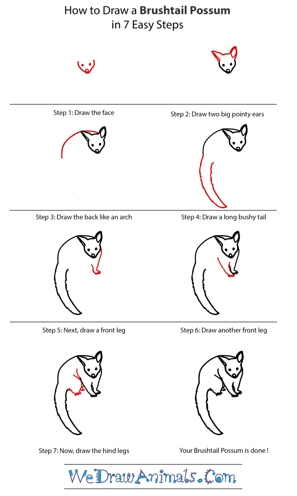 How to Draw a Brushtail Possum - Step-by-Step Tutorial