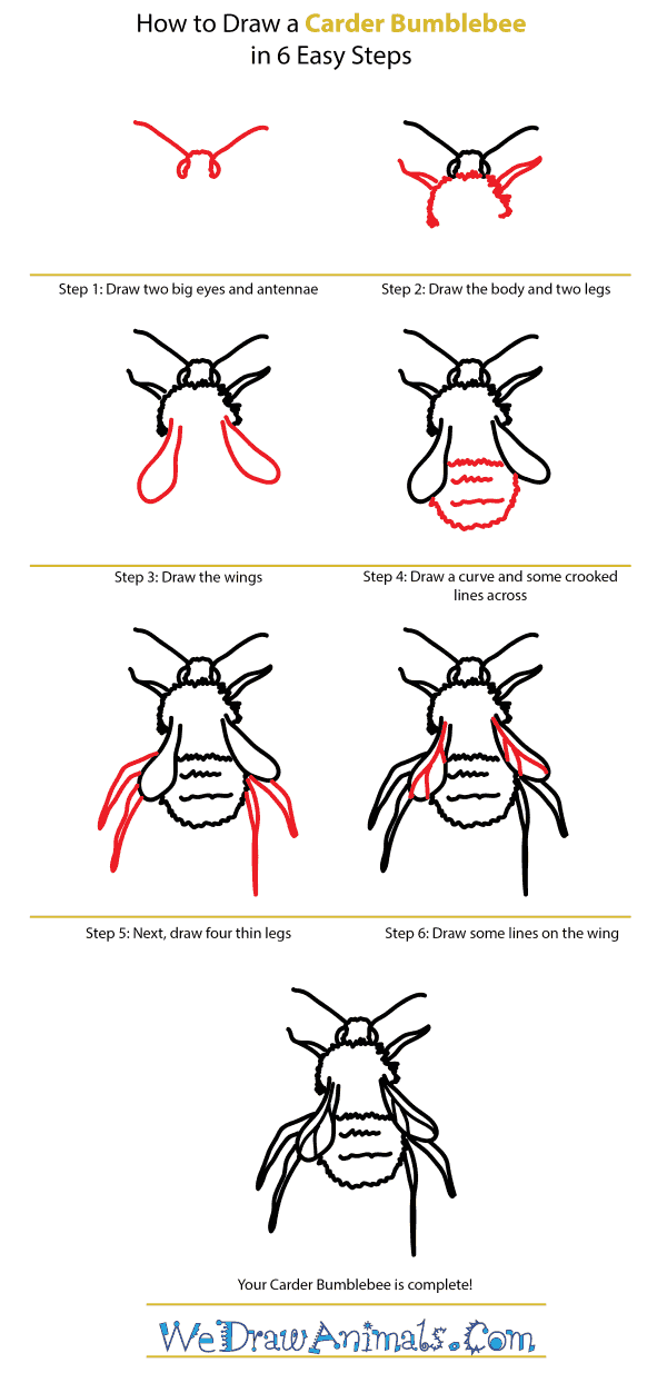 How to Draw a Carder Bumblebee - Step-by-Step Tutorial