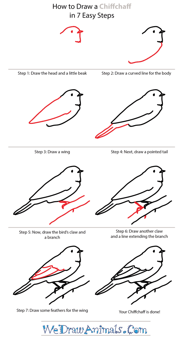 How to Draw a Chiffchaff - Step-by-Step Tutorial