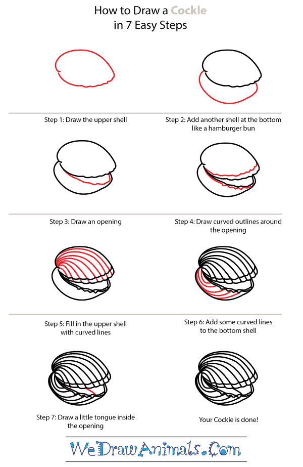 How to Draw a Cockle - Step-by-Step Tutorial