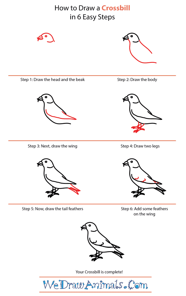 How to Draw a Crossbill - Step-by-Step Tutorial