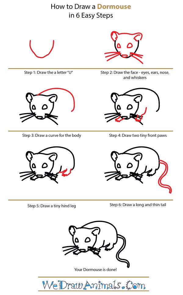 How to Draw a Dormouse - Step-by-Step Tutorial