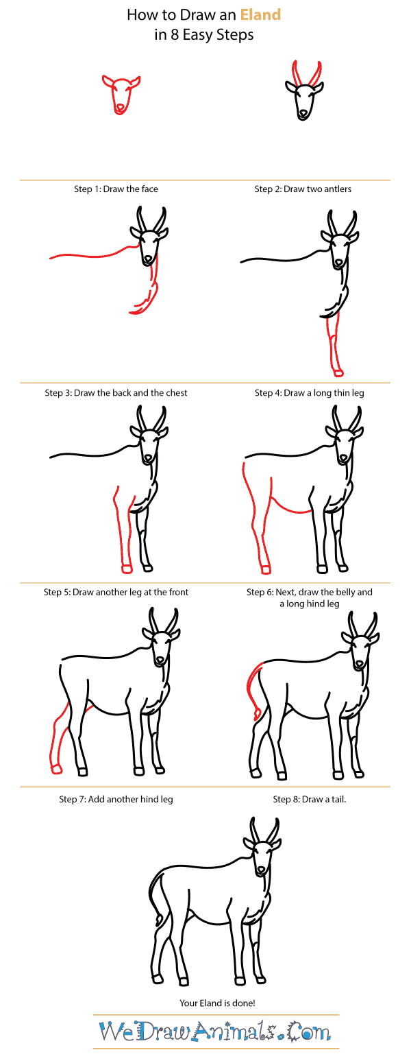 How to Draw an Eland - Step-by-Step Tutorial